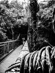 Shashin - DSCN2806 (Mathieu Perron) Tags: life city bridge people bw white black monochrome japan nikon noir perron daily nb journey  mp blanc japon personne ville gens vie mathieu   sjour   quotidienne      p520  zheld