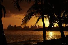 Vereda Tropical (Bernai Velarde-Light Seeker) Tags: ocean city sunset sea america palms atardecer mar republic pacific centro ciudad panama pacifico cental oceano palmas velarde repulica bernai