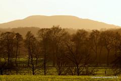 Haldenblick (grafenhans) Tags: winter licht sony alpha 700 tamron landschaft wald halde bergbau tiefenschrfe a700 alpha700 grafenwald 5663200400