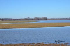 Cumberland River Out of It's Banks_8890 (Porch Dog) Tags: sky water landscape kentucky scenic 2016 lyoncounty garywhittington nikon18300mm nikond7000 cumberlandriverbackwater