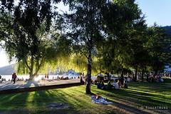 20160206-29-Sunset through trees on Lake Wakatipu (Roger T Wong) Tags: city travel newzealand summer people tree nz southisland otago queenstown backlit lakewakatipu 2016 sony2470 rogertwong sel2470z sonyfe2470mmf4zaosscarlzeissvariotessart sonya7ii sonyilce7m2 sonyalpha7ii