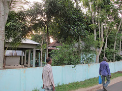 IMG_6950.jpg (Kuruman) Tags: sylhet bangladesh srimangal
