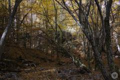 Hayedo de Tejera Negra (irenegf) Tags: autumn espaa fall spain guadalajara otoo negra orton hayas castillalamancha tejera hayedo ortoneffect efectoorton hayedodetejeranegra