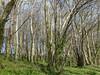 P1000005 (edmundrt) Tags: trees green forest lumix somerset panasonic lx7 lumixlx7 dmclx7