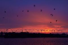 Kleurrijke opkomst (zsnajorrah) Tags: bridge sky urban motion haarlem water netherlands spaarne birds animals silhouette clouds sunrise earlymorning explore bluehour ef2470mmf4l schoterbrug 7dmarkii