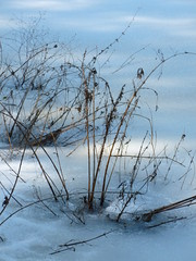 Lake shore (Mullica) Tags: park county new blue lake snow cold ice nature water nj shore jersey salem shrub wetland parvin