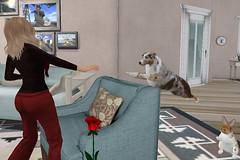 Brace Myself: Here Comes a Leap of Love (Rosanna Himmel) Tags: dog pet bunny dogs valentine sl secondlife australianshepherd ai artificialintelligence vkc virtualkennelclub smartpet enricogenosse animatedpet scriptedpet leapintolove