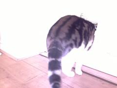 20160210-122958-o-1 (Catflap central) Tags: camera dog pet cats woof cat pi raspberry meow doggie catdoor catflap kattenluik katzenklappe catflapj2nnl taggingasdoguntilautotagginghasanoptout robotaggingisthedevil