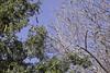 Side Bird and Two Trees (cobalt123) Tags: arizona canon tucson firstphotos age11 2016 anavey tucsonrockandgemshow xti canonrebelxti anaveybolender
