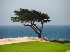Tree (kallebo20) Tags: sea green grass coast meer pacific lawn baum rasen kste