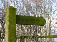 Millennium Walk, Daresbury - fingerpost (ell brown) Tags: greatbritain trees england tree sign village cheshire unitedkingdom path millenniumwalk directionsign daresbury halton fingerpost chesterrd daresburyvillage daresburyconservationarea chesterrddaresbury