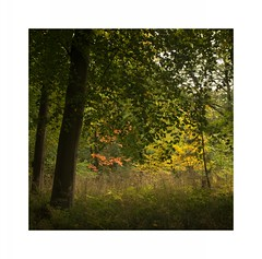 Pocket of colour in Blagdon Woods (Ali's view) Tags: autumn colour woodland square blagdon