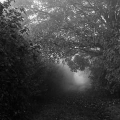 Chemin vers l'inconnu (mr_myz) Tags: road blackandwhite bw mist france tree nature monochrome fog forest canon landscape eos blackwhite noiretblanc outdoor nb route paysage foret arbre brouillard chemin vosges noirblanc exterieur eos70d infinitexposure mrmyz