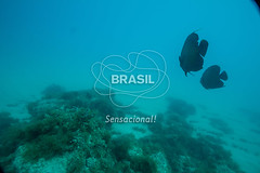 NE_Abrolhos0002 (Visit Brasil) Tags: horizontal brasil fauna natureza bahia nordeste detalhe externa abrolhos semgente subaqutica diurna