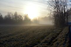 November morning mist (Salmi recreation area, Vihti, 20151129) (RainoL) Tags: november winter mist fog finland geotagged fin uusimaa 2015 nyland salmi vihti vichtis 201511 salmenulkoilualue salmirecreationarea 20151129 geo:lat=6037345272 geo:lon=2449748792