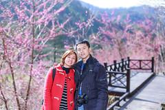 IMG_1355 (JIMI_lin) Tags: taiwan sakura 台灣 tw 櫻花 武陵農場 浪漫 台中市 粉紅佳人 和平區