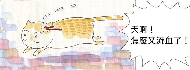 家裡來了一隻貓 人不能心軟