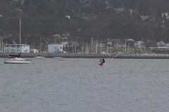 IMG_2602 (armadil) Tags: beach beaches mavericks kitesurfers windsurfers californiabeaches