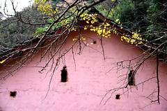 Ginkgo house (MelindaChan ^..^) Tags: china pink autumn plant fall yellow wall leaf ginkgo village guilin mel melinda guangxi 桂林 廣西 chanmelmel melindachan 小平樂 海洋鄉