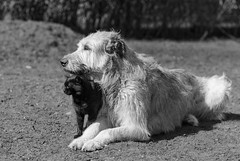 _F012754-2 (b.kunst17) Tags: bw dog pet cats pets white black dogs animal animals cat tiere nikon hund ii sw katze 28 70200 katzen haustier schwarz hunde vr tier haustiere weis d3s