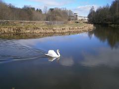 Swan Lake - Canal