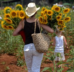 Spring is coming..... (tvdflickr) Tags: sunflowers flowers plants spring summer yellow lady child hat georgia festival sunflowerfestival woman girl nikon d200 nikond200 photobytomdriggers thomasdriggersphotography