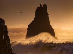"""""""Jonathan Livingstone seagull"""" (ArnarKristjans_photography) Tags: trip travel sunset sea usa seascape bird tourism beach nature water rock colo america canon landscape photography landscapes iceland amazing travels europe photographer photoshoot ngc tourists cliffs commercial geography traveling waterscape fantasticnature phototours"""