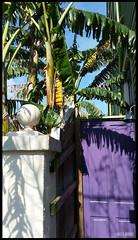 (James Mundie) Tags: louisiana neworleans mundie copyrightprotected jamesmundie jamesgmundie profjasmundie jimmundie copyrightjamesgmundieallrightsreserved faubourgtremlafitte