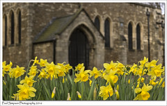 St Lawrence, Scunthorpe (Paul Simpson Photography) Tags: church nature petals religion lincolnshire stlawrence daffodils yellowflowers scunthorpe stonebuilding photosof imageof photoof northlincs imagesof southhumberside sonya77 paulsimpsonphotography thingstoseeinscunthorpe