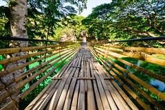 Hanging Bridge (Hendraxu) Tags: travel bridge travelling nature philippines bamboo bohol hanging f28 14mm samyang sipatan