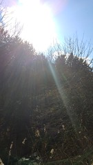 20160331_154819_HDR (reeceburkhard) Tags: light summer sky sun sunlight nature beautiful sunshine weather shine bright sunny lookup blueskies sunrays clearsky sunnyday thesun photooftheday beautifulday sunnydays brightsun goodday clearskies goodweather skywatcher toptags instagood instasun instasunny