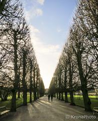 Walk in the park (KronaPhoto) Tags: park street light people tree walk natur tre reiser kbenhavn alle