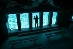 Un nuevo mundo (palm z) Tags: parque france banco bancos francia acuario plantesauvage