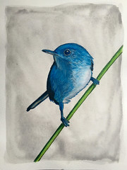 Colleen's Blue Bird (bledsaw_84) Tags: bluebird prismacolor coloredpencil