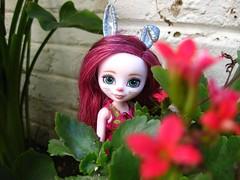 New bunny in the garden (MissLAndMrH) Tags: pixie eah