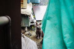 Today's Cat@2016-04-14 (masatsu) Tags: cat pentax catspotting mx1 thebiggestgroupwithonlycats