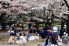 20160405-038-Picnics under Yoyogi-koen cherry blossoms (Roger T Wong) Tags: travel people holiday japan garden balloons tokyo spring picnic crowd harajuku cherryblossoms yoyogikoen 2016 canonef70200mmf4lisusm canon70200f4lis canoneos6d rogertwong