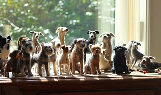 dog pack in my window
