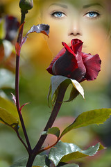 That Pretty Rose (swong95765) Tags: woman art rose lady garden nose bush eyes pretty bokeh maroon blueeyes watching smell sniff viewing scent smelling