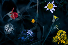 Primaveras (una cierta mirada) Tags: flowers blue red flower macro green nature colors yellow spring seasons closer