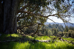 A Refuge (Reptilian_Sandwich) Tags: blue tree green nature grass forest outdoor hiking branches eucalyptus vignette afternoonlight