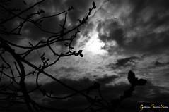 Nubes y ramas (Batosanut) Tags: espaa blancoynegro contraluz toledo nubes rbol ramas