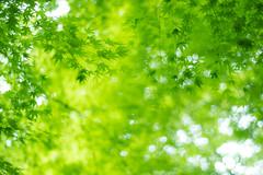 fresh green (yskark) Tags: green
