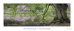 The Old Sentinal (baldwinm16) Tags: lake nature season illinois spring midwest shoreline il freemanmaple natureofthingsphotography