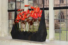 De Gentse Floralin 2016 - Site Sint-Pietersplein/Sint-Pietersabdij (Zeldenrust) Tags: flower fleur town flora belgium belgique flor belgi ciudad stadt blume ghent gent ville stad gand gante flanders belgien bloem flandres naturephotography blgica vlaanderen abdij floralin flandern flandre flandes natuurfotografie flowerphotography sintpietersabdij zeldenrust ghentfloralies floraliesgantoises vanzeldenrust hendrikvanzeldenrust defloralingent genterfloralien floraliesgantoises2016 sintpietersabdijgent floralingent floralin2016