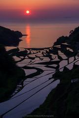Hamanoura rice terraces (Tomohiro Urakawa) Tags:  riceterraces  hamanoura