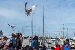 Victoria, BC (WarpFactorEnterprises) Tags: road trip vacation seagulls vancouver island spring bc victoria wharf fishermans thieves portrenfrew sooke cowichanbay 2016 2016springvancouverislandroadtripvacationcowichan bay2016