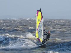 PC310433-Edit (Brian Wadie Photographer) Tags: gulls oystercatcher windsurfing kiting em1 goodlight 14xtc avonbeach canon70300lis hemgistburyhead