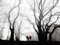..... (a.penny) Tags: hohe kanzel hessen rheingau taunus kreis niedernhausen nikon aw120 apenny wald nebel fog mist dunst trees beech buche haze silhouette forest