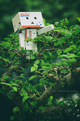 Toy Story    The Way To The Secret Forest (randyfoo) Tags: yotsuba danbo toyphotography revoltech danboard